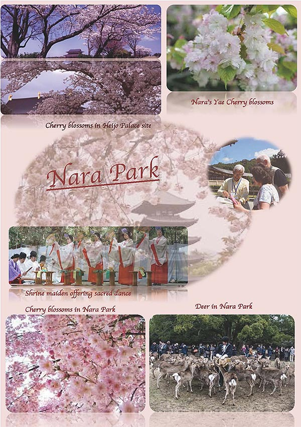 Four Seasons in Nara spring #1